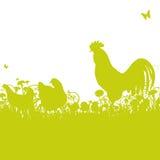 Κοτόπουλο και κόκκορας Στοκ φωτογραφία με δικαίωμα ελεύθερης χρήσης