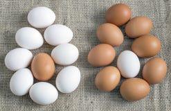 Κοτόπουλο καφετιών και άσπρων αυγών στοκ εικόνες