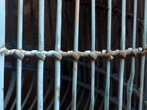 κοτόπουλο κλουβιών μον Στοκ Εικόνα
