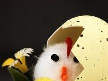 Κοτόπουλο Πάσχας που βγαίνει από το αυγό Στοκ φωτογραφία με δικαίωμα ελεύθερης χρήσης