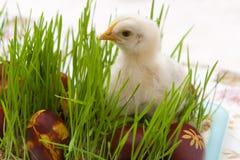 Κοτόπουλο Πάσχας Στοκ Φωτογραφίες