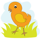 Κοτόπουλο στην πράσινη χλόη Στοκ φωτογραφία με δικαίωμα ελεύθερης χρήσης