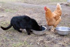 Κοτόπουλο στη φύση Στοκ φωτογραφία με δικαίωμα ελεύθερης χρήσης