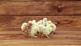Κοτόπουλο στον ξύλινο πίνακα απόθεμα βίντεο