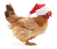 Κοτόπουλο στο καπέλο Χριστουγέννων Στοκ φωτογραφία με δικαίωμα ελεύθερης χρήσης