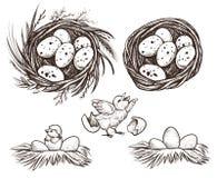 Κοτόπουλο συνόλου και εκκόλαψης φωλιών ανασκόπηση που σύρει το floral διάνυσμα χλόης Στοκ Φωτογραφίες