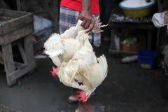 Κοτόπουλο της Αϊτής στοκ εικόνες με δικαίωμα ελεύθερης χρήσης