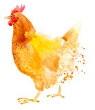 Κοτόπουλο Watercolor κοτόπουλου απεικόνιση αποθεμάτων