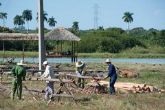 Κουβανικά άτομα που τεμαχίζουν τα κούτσουρα στοκ φωτογραφία