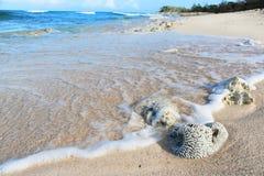 Κουβανική άγρια παραλία Στοκ Φωτογραφία