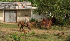 Κουβανικοί κάουμποϋ, Gaucho και τα άλογά τους Στοκ Φωτογραφίες