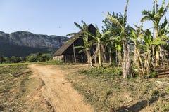 Κουβανικό σπίτι πούρων Στοκ Φωτογραφία
