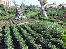 Κουζίνα-κήπος 2 στοκ εικόνα με δικαίωμα ελεύθερης χρήσης