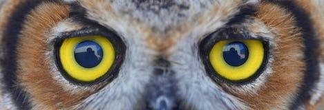 κουκουβάγια ματιών Στοκ Φωτογραφία