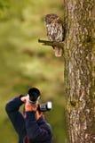 Κουκουβάγια με το φωτογράφο Καστανόξανθη κουκουβάγια που κρύβεται στη δασική καφετιά συνεδρίαση κουκουβαγιών στο κολόβωμα δέντρων Στοκ φωτογραφία με δικαίωμα ελεύθερης χρήσης