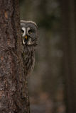 Κουκουβάγια σε ένα δάσος Στοκ φωτογραφίες με δικαίωμα ελεύθερης χρήσης