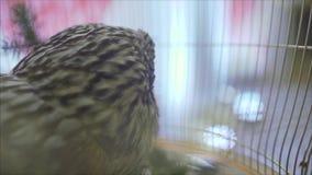 Κουκουβάγια σε ένα κλουβί στο γεγονός φιλμ μικρού μήκους
