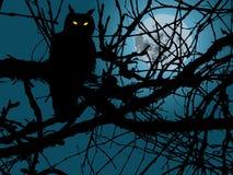 Κουκουβάγια στη νύχτα Στοκ φωτογραφίες με δικαίωμα ελεύθερης χρήσης