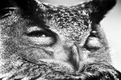 κουκουβάγια Στοκ φωτογραφία με δικαίωμα ελεύθερης χρήσης