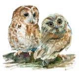 Κουκουβάγιες απεικόνισης Watercolor Στοκ Φωτογραφία