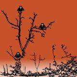 κουκουβάγιες τρία Στοκ Φωτογραφία