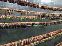 Κουκούλια πεταλούδων Στοκ Φωτογραφίες