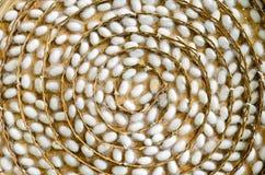 Κουκούλια σκουληκιών μεταξιού στις άσπρες φωλιές στοκ εικόνες
