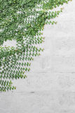 Κουμπιά παλτών, μεξικάνικη μαργαρίτα στον τοίχο Στοκ εικόνες με δικαίωμα ελεύθερης χρήσης