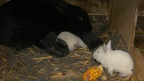 Κουνέλια στο κλουβί στο αγρόκτημα φιλμ μικρού μήκους