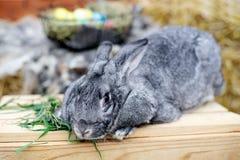 Κουνέλι λαγουδάκι Πάσχας με τα χρωματισμένα αυγά Έννοια Πάσχας, ζώων, άνοιξη, εορτασμού και διακοπών στοκ εικόνα με δικαίωμα ελεύθερης χρήσης
