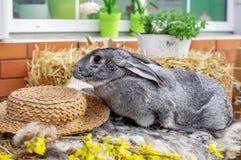 Κουνέλι λαγουδάκι Πάσχας με τα χρωματισμένα αυγά Έννοια Πάσχας, ζώων, άνοιξη, εορτασμού και διακοπών στοκ εικόνα