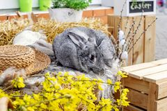 Κουνέλι λαγουδάκι Πάσχας με τα χρωματισμένα αυγά Έννοια Πάσχας, ζώων, άνοιξη, εορτασμού και διακοπών στοκ εικόνες