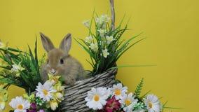 Κουνέλι λαγουδάκι στα λουλούδια φιλμ μικρού μήκους