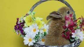 Κουνέλι λαγουδάκι στα λουλούδια απόθεμα βίντεο