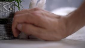 Κουνέλι με μια μεγάλη μύτη που χαϊδεύεται από ένα ανθρώπινο χέρι απόθεμα βίντεο