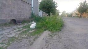Κουνέλι με τα άσπρα λουλούδια που κάθονται στην πράσινη χλόη απόθεμα βίντεο