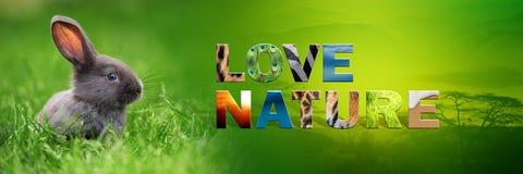 Κουνέλι με τη φύση αγάπης κειμένων Στοκ εικόνα με δικαίωμα ελεύθερης χρήσης