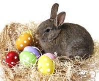Κουνέλι Πάσχας και αυγά Πάσχας Στοκ Φωτογραφία