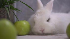 Κουνέλι που πέφτει κοιμισμένο μπροστά από τα πράσινα μήλα και ένα ξύλινο καλάθι απόθεμα βίντεο