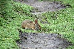 Κουνέλι στην οικολογική επιφύλαξη Antisana Στοκ φωτογραφία με δικαίωμα ελεύθερης χρήσης