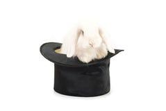 Κουνέλι στο μαύρο καπέλο Στοκ Φωτογραφία