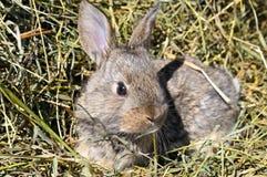 Κουνέλι της Pet στο υπόβαθρο της ξηράς χλόης Στοκ φωτογραφία με δικαίωμα ελεύθερης χρήσης