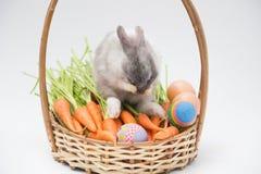 Κουνέλια μωρών με το αυγό και τα μίνι καρότα Στοκ φωτογραφία με δικαίωμα ελεύθερης χρήσης