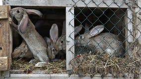 Κουνέλια σε ένα hutch φιλμ μικρού μήκους
