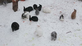Κουνέλια το χειμώνα απόθεμα βίντεο