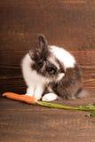 Κουνέλι με το καρότο στοκ φωτογραφία με δικαίωμα ελεύθερης χρήσης