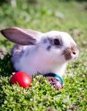 Κουνέλι Πάσχας και αυγά Πάσχας Στοκ Φωτογραφίες