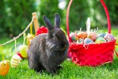 Κουνέλι Πάσχας και αυγά Πάσχας Στοκ Εικόνα