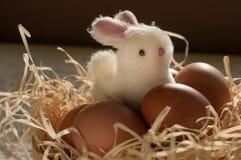 Κουνέλι Πάσχας μέσα σε ένα σύνολο κόσκινων των αυγών Πάσχας στο αγροτικό ξύλο Στοκ Εικόνα