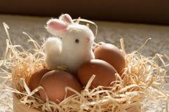 Κουνέλι Πάσχας μέσα σε ένα σύνολο κόσκινων των αυγών Πάσχας στο αγροτικό ξύλο Στοκ εικόνες με δικαίωμα ελεύθερης χρήσης